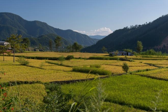 nepal-2013-831-of-1653